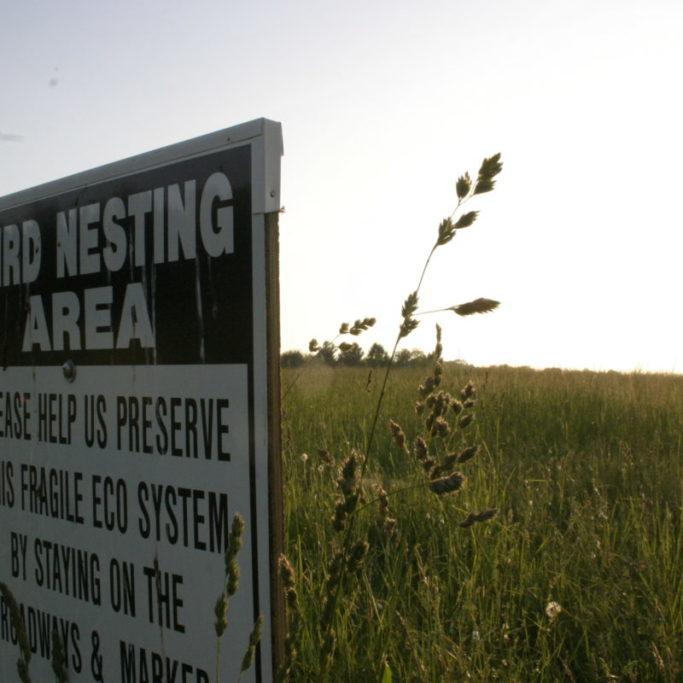 Bird Nesting in the Hayfields