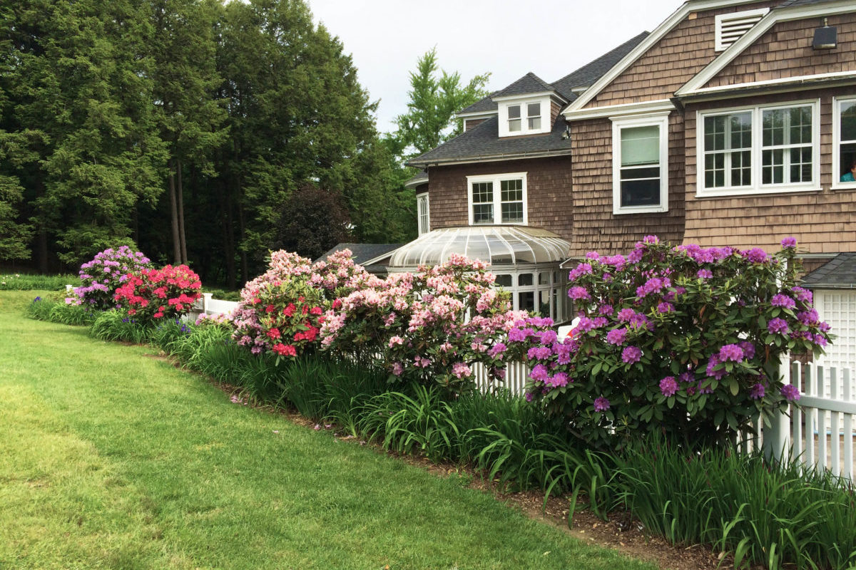 various color rhododendrons in bloom