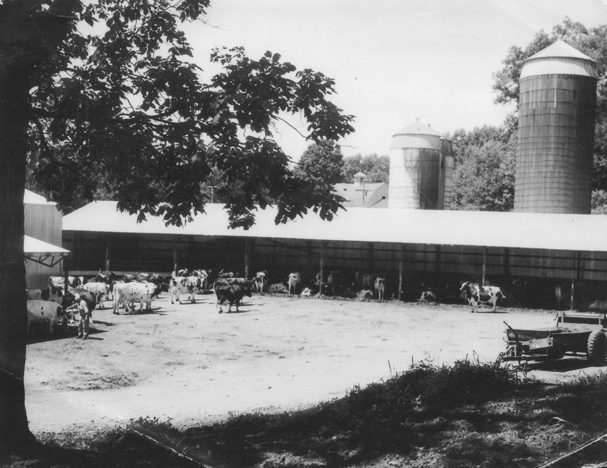 photo of cows, silo's and barn