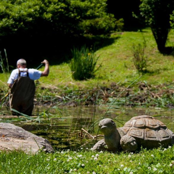 man in waders raking out weeds from pond