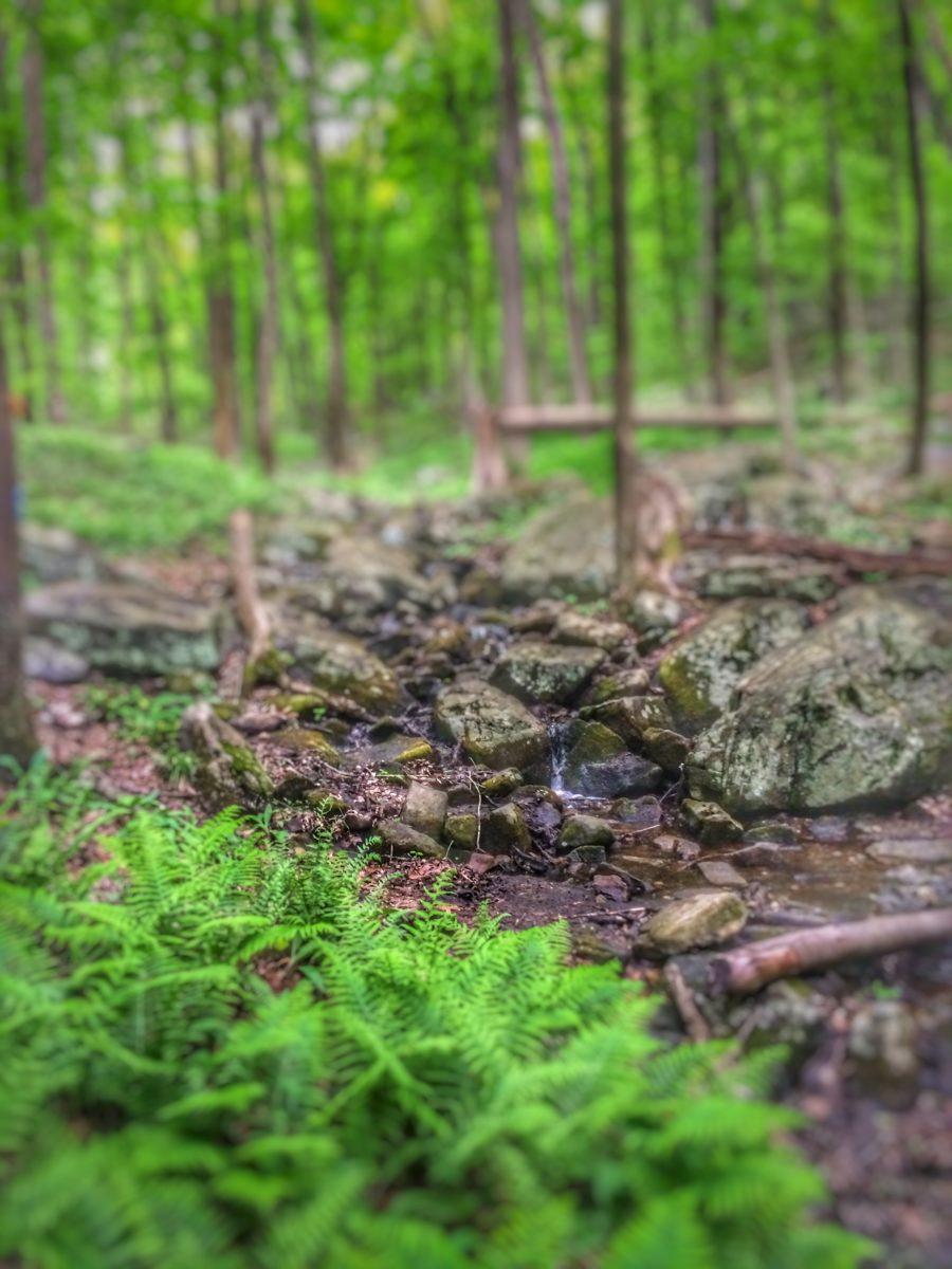 woods, green ferns, muddy trails