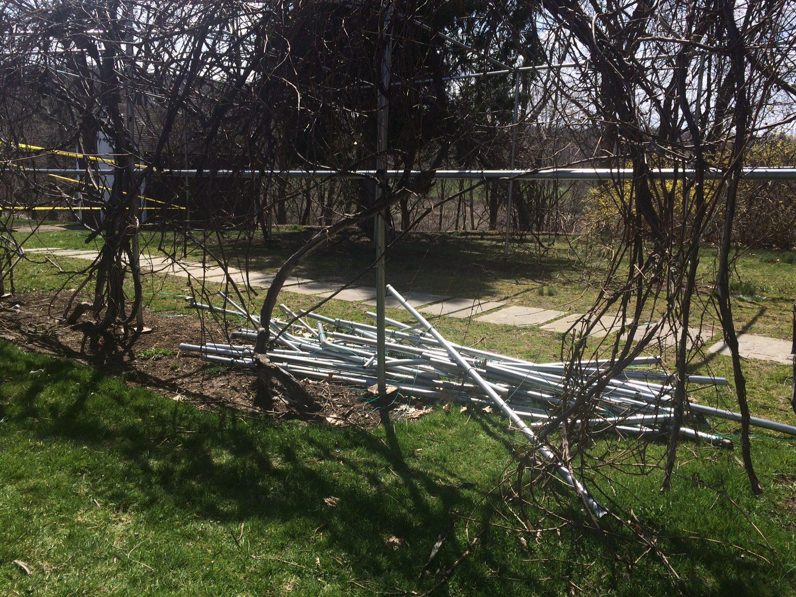 Grape Arbor Structural Damage