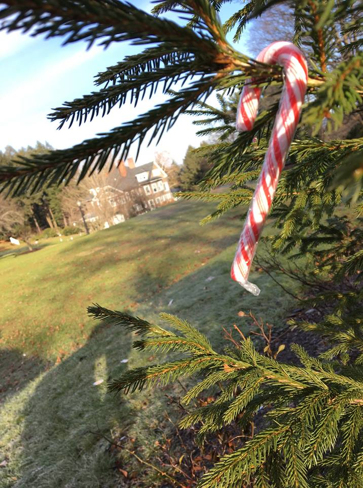 tree with candy cane hanging from branch