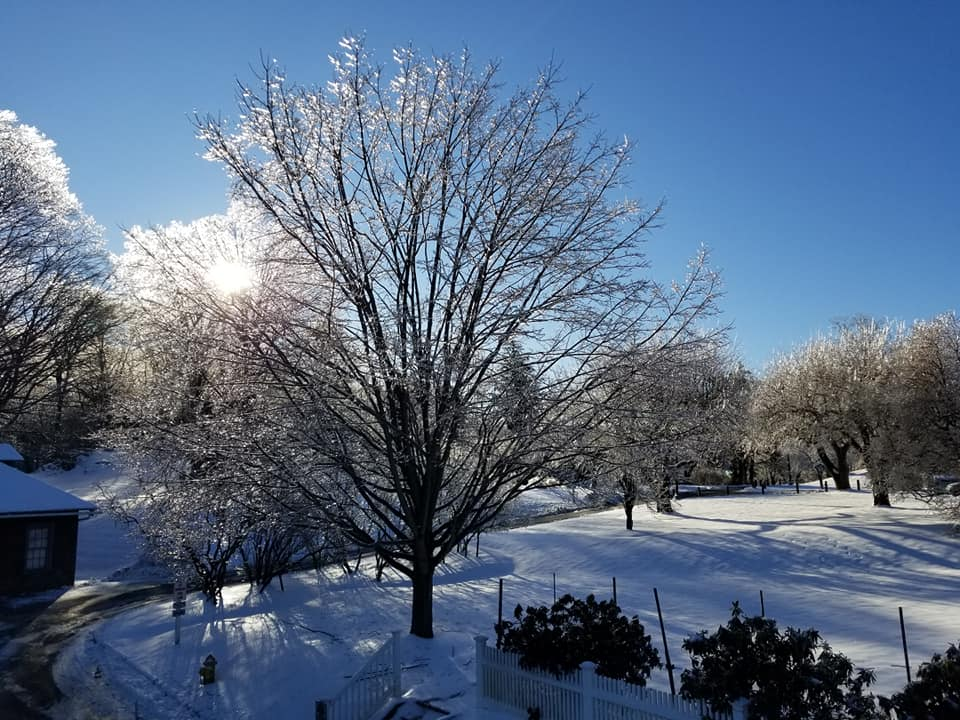 lawns and dogwood tree covered in snow and ice