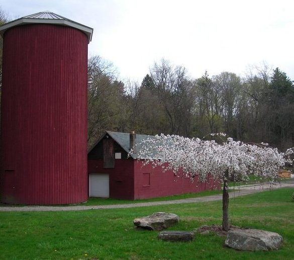 silo-milking-parlor