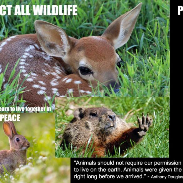fawn rabbit and gopher respect all wildlife