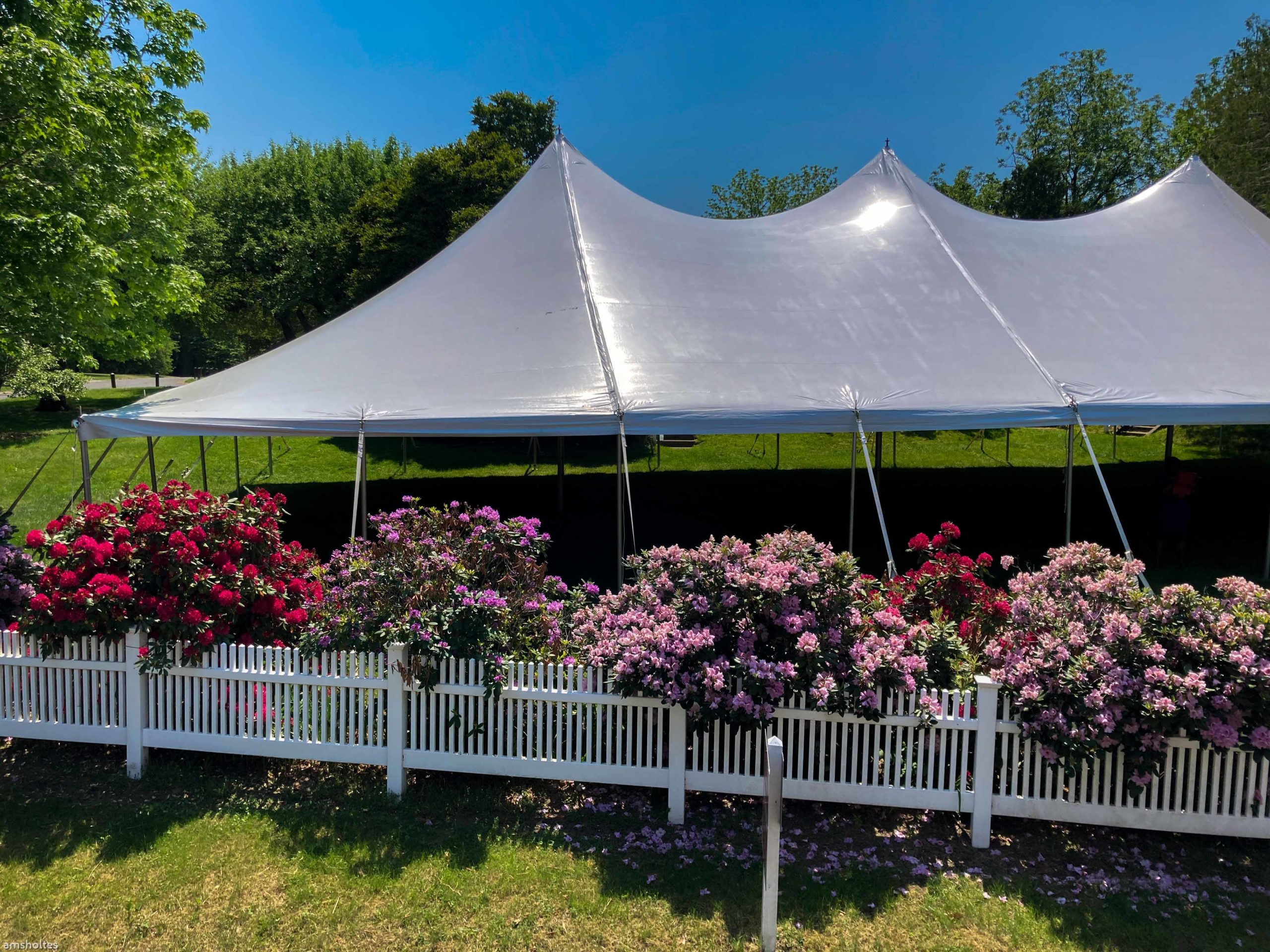 wedding tent surrounded by rhododendrons