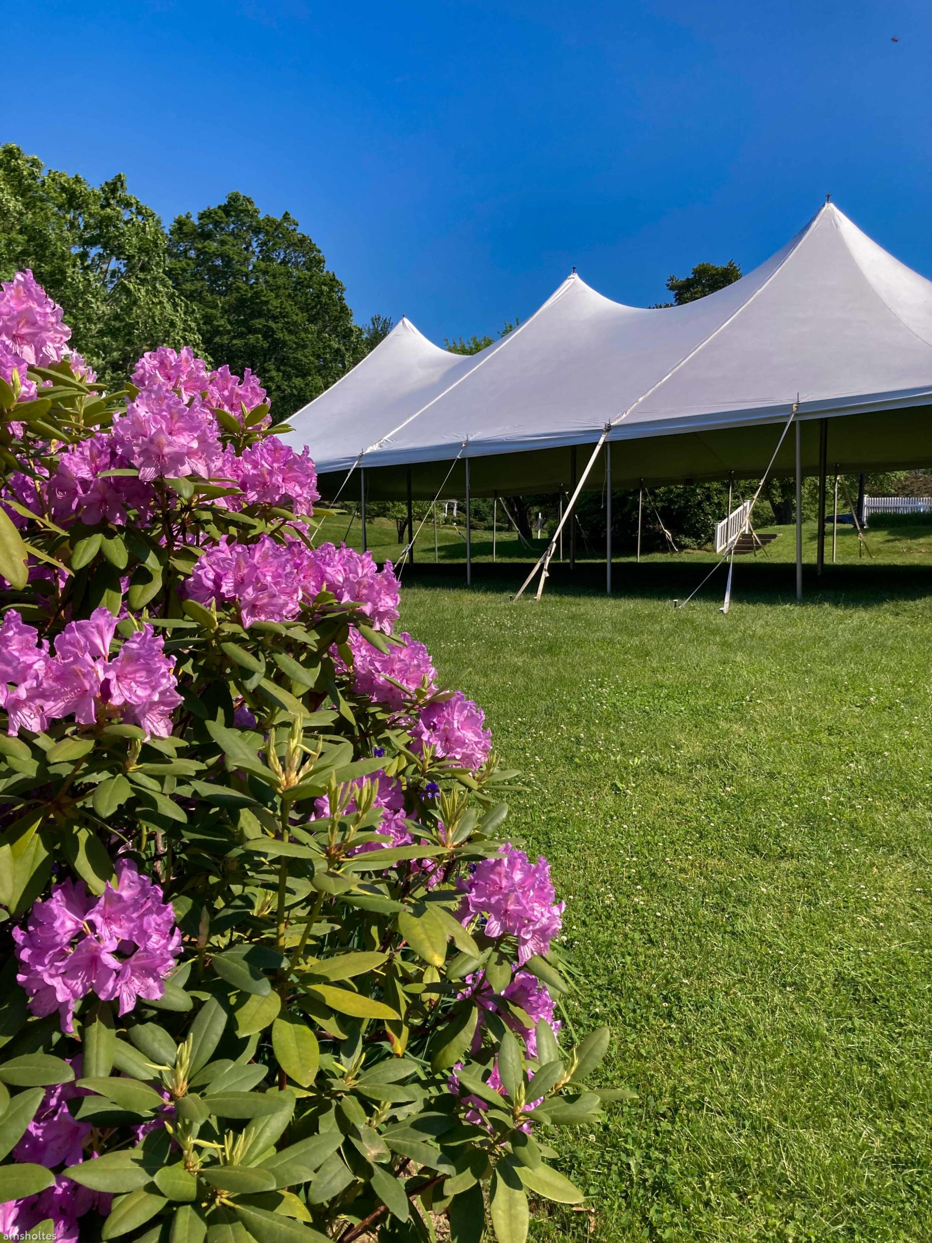 flowers with tent on lawn
